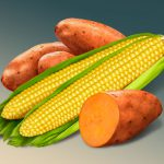Food Illustration, Mixed Vegetables, Corn on the Cob, Sweet Potato, Gerber, by Lonnie Busch, Franklin, North Carolina